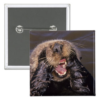 Sea Otters, Enhydra lutris 6 15 Cm Square Badge