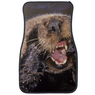 Sea Otters, Enhydra lutris 6 Car Mat