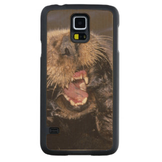 Sea Otters, Enhydra lutris 6 Carved Maple Galaxy S5 Case
