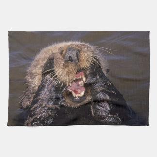Sea Otters, Enhydra lutris 6 Hand Towel
