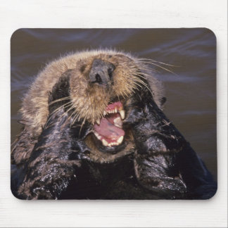 Sea Otters, Enhydra lutris 6 Mouse Mat