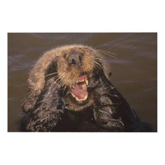 Sea Otters, Enhydra lutris 6 Wood Wall Art
