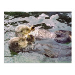 Sea Otters Holding Hands Postcard
