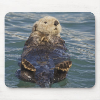 Sea otters play on icebergs at Surprise Inlet Mouse Mat
