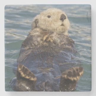 Sea otters play on icebergs at Surprise Inlet Stone Coaster