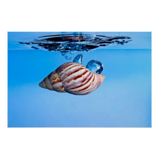 Sea Shell Drop into Water Poster
