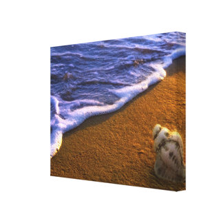 Sea Shell In Surf Zone Canvas Print