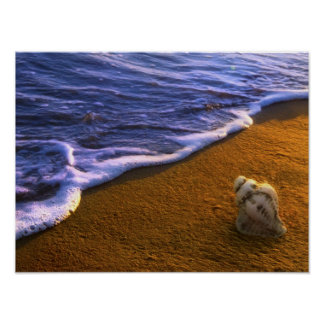 Sea Shell In Surf Zone Poster