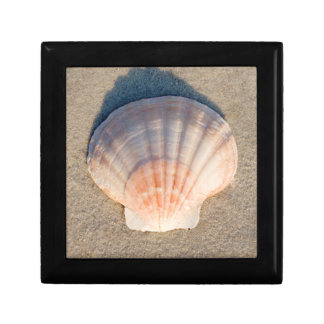 Sea Shell Laying On Sandy Beach Small Square Gift Box