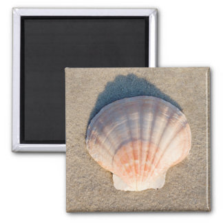Sea Shell Laying On Sandy Beach Square Magnet