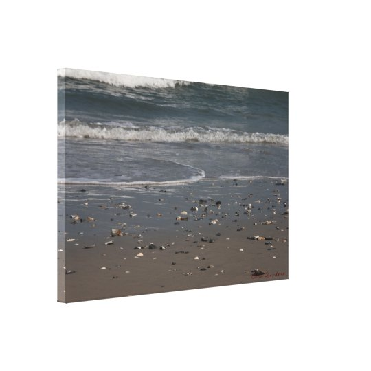 Sea Shell Littered Beach Canvas Print