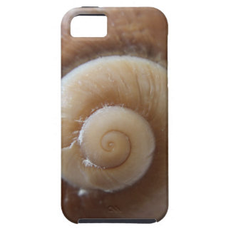 sea shell photograph iPhone 5 cover