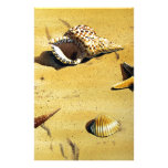 Sea Shell Series VI Customized Stationery