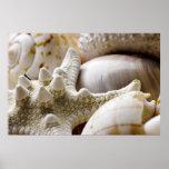 Sea Shell Starfish Background - Beach Shells