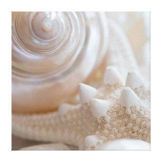 Sea Shell & Starfish Background - Beach Shells Canvas Print