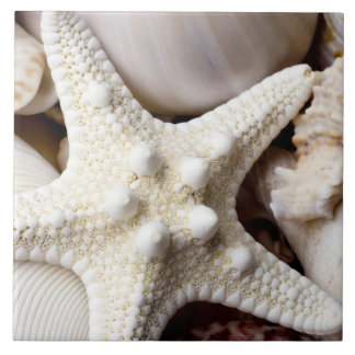 Sea Shell Starfish Background - Beach Shells Large Square Tile
