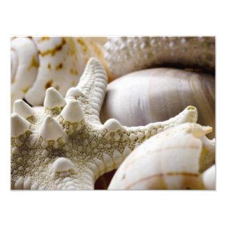 Sea Shell Starfish Background - Beach Shells Photograph