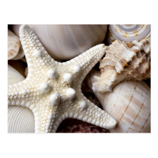 Sea Shell Starfish Background - Beach Shells Postcard