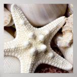 Sea Shell Starfish Background - Beach Shells Print