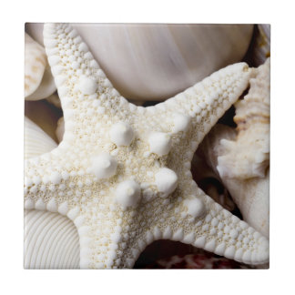 Sea Shell Starfish Background - Beach Shells Small Square Tile