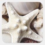 Sea Shell Starfish Background - Beach Shells Square Sticker