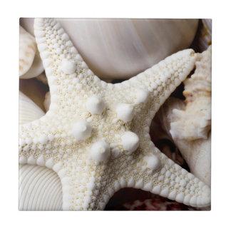 Sea Shell Starfish Background - Beach Shells Tile