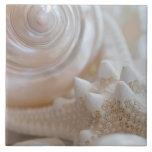 Sea Shell & Starfish Background - Beach Shells Tile