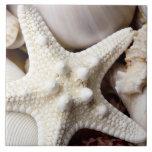 Sea Shell Starfish Background - Beach Shells Ceramic Tile