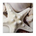 Sea Shell Starfish Background - Beach Shells Tiles
