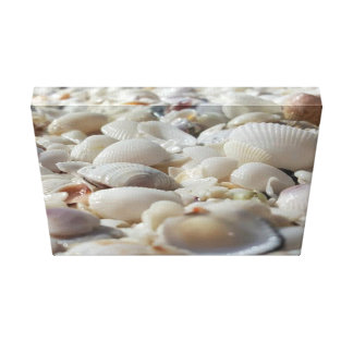 "Sea Shells 14"" x 11"", 1.5"", Single Canvas Print"
