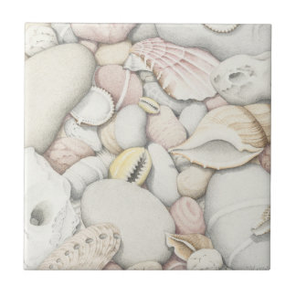 Sea Shells and Pebbles in Coloured Pencil Tile