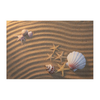 Sea Shells And Starfish Acrylic Wall Art