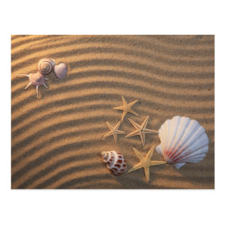Sea Shells And Starfish Postcard