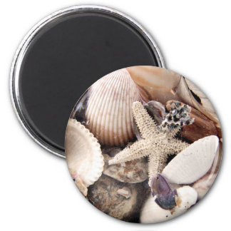 Sea Shells by the Shore 6 Cm Round Magnet