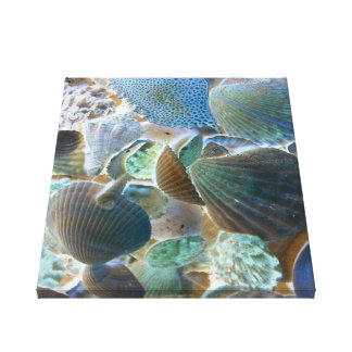 Sea Shells Canvas Canvas Print
