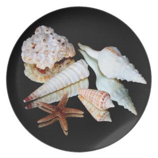 Sea Shells on a Mirror Plate