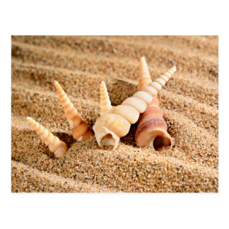 Sea shells on sand postcard