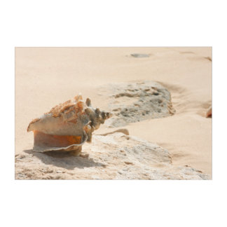 Sea Shells On The Beach Acrylic Print