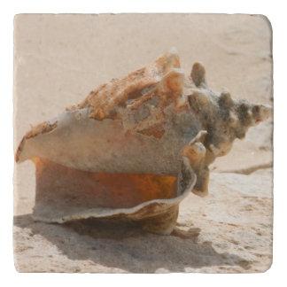 Sea Shells On The Beach Trivets