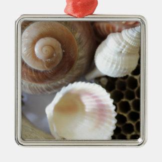 sea shells photograph christmas ornament