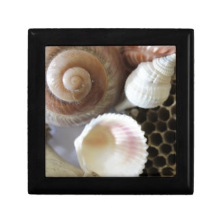 sea shells photograph gift box