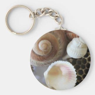 sea shells photograph key ring