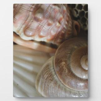 sea shells photograph plaque