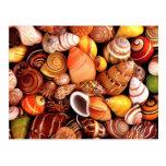 Sea Shells Post Card