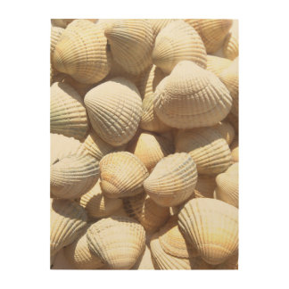 Sea Shells, Summer Beach Exotic Tropical Romantic Wood Prints