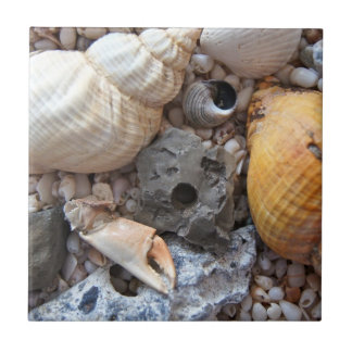 Sea Shells Upon the Beach Tile
