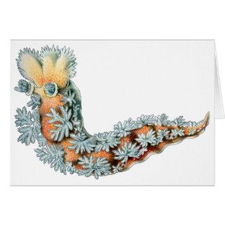 Sea Slug Card