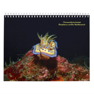 Sea Slugs 2015 Wall Calendars