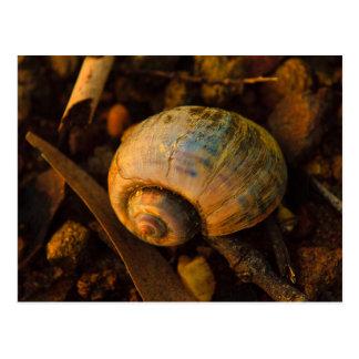 Sea Snail Shell on Rocky Shore Sunset Postcard