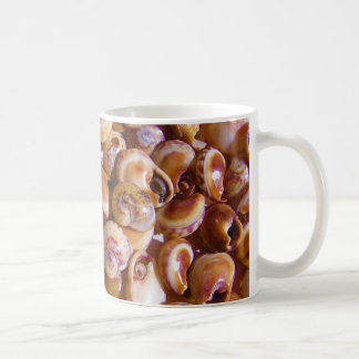 Sea Snail Shells Cyclops Nassa Cyclope Pellucidus Basic White Mug